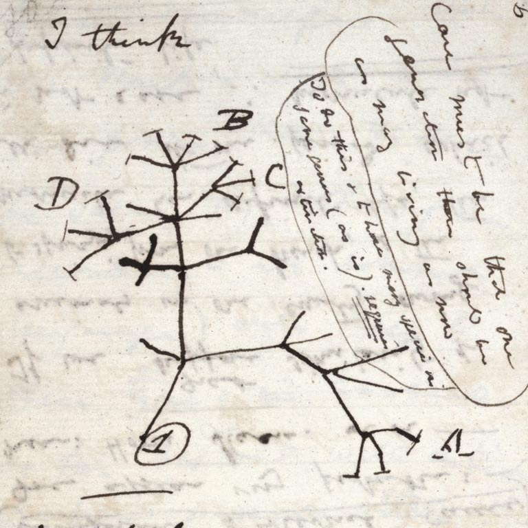 Darwin Tree 1837 (scratch notes on a piece of paper)
